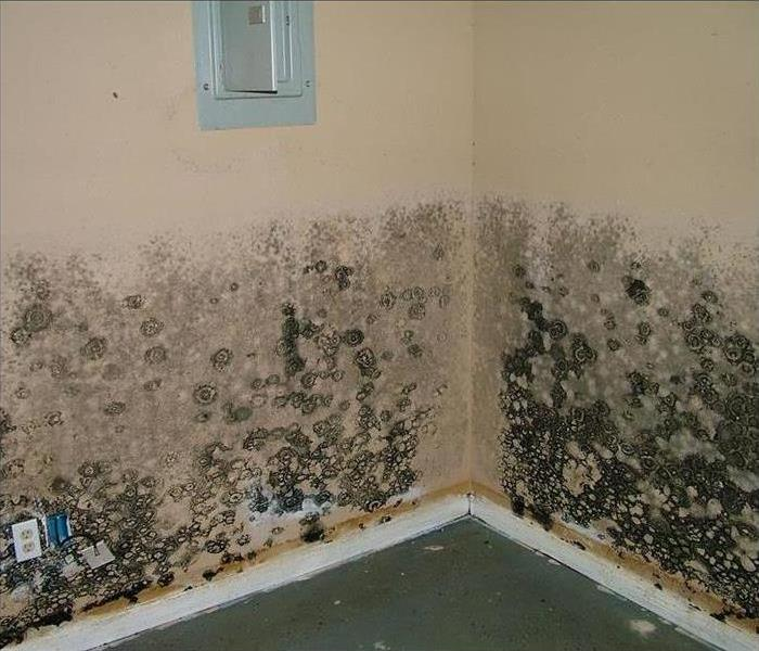 Mold Remediation Mold Myth Busters