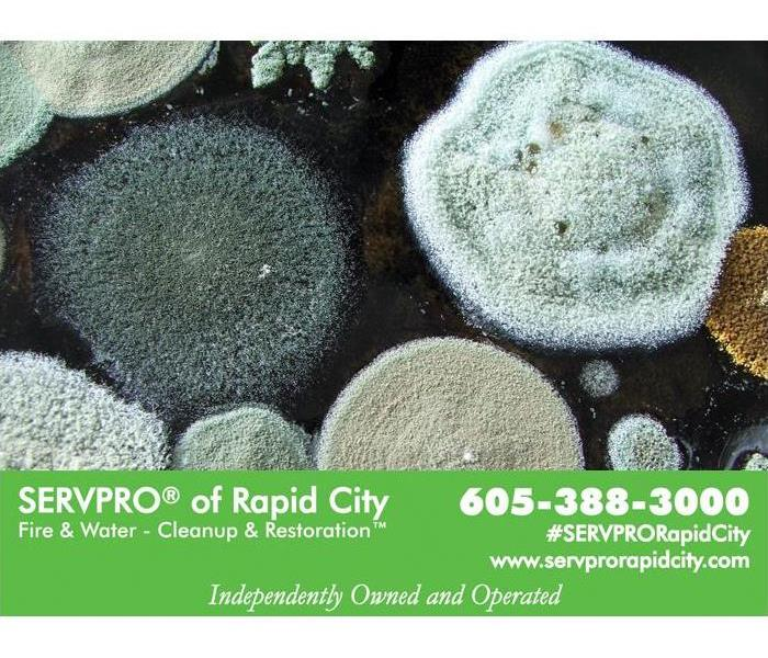 Mold Remediation What are the different types of M-O-L-D?